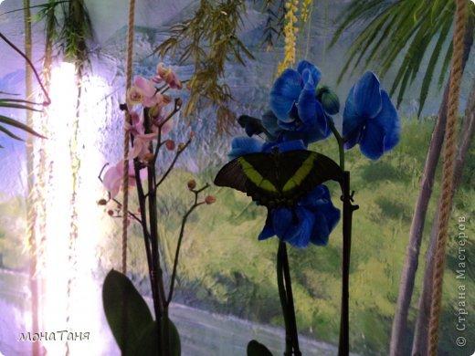 Сад тропических бабочек и орхидей фото 10
