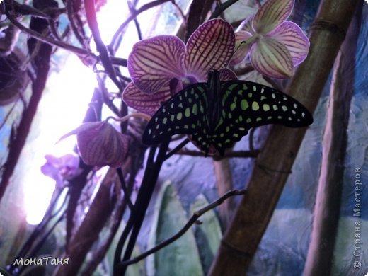 Сад тропических бабочек и орхидей фото 11