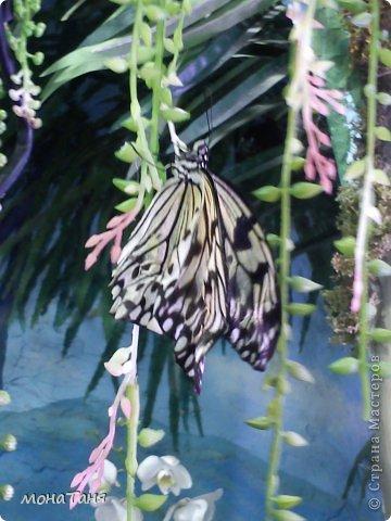 Сад тропических бабочек и орхидей фото 5