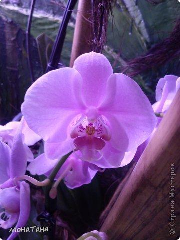 Сад тропических бабочек и орхидей фото 7