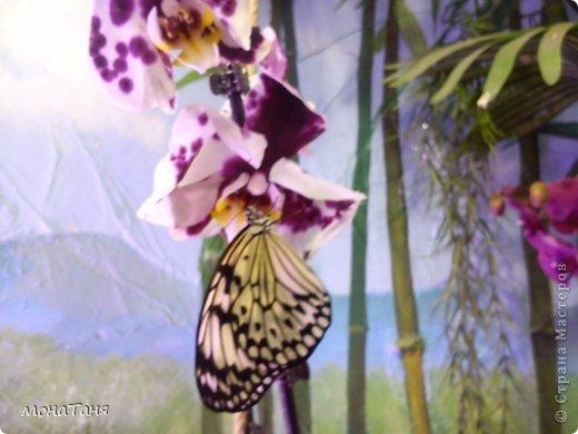Сад тропических бабочек и орхидей фото 2