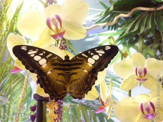 Сад тропических бабочек и орхидей