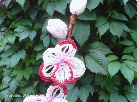 Поделка изделие День рождения Бисероплетение Орхидея Вишенки Бисер фото 3.