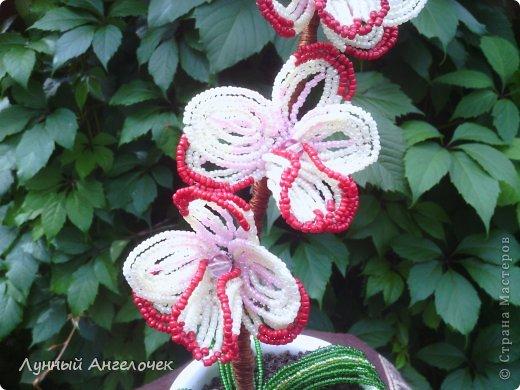 Поделка изделие День рождения Бисероплетение Орхидея Вишенки Бисер фото 2.