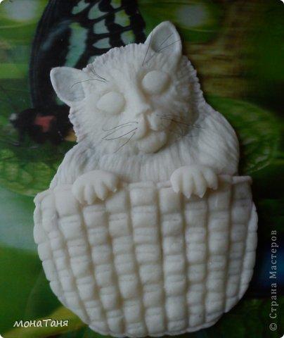 Кот в корзине фото 3