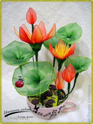 vodnaya_liliya_krasnaya Несколько моих цветочных композиций из капрона