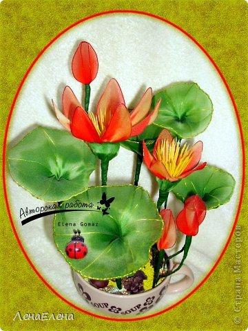 vodnaya_liliya_krasnaya1 Несколько моих цветочных композиций из капрона