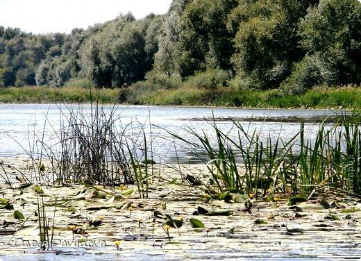 Доброго времени суток! В первый день осени добралась до летних фотографий. В июле мы были в Балашове.  Начну с Хопра - это главная достопримечательность  фото 15