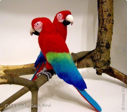 Маленькие зеленокрылые ары (всего 19 см) были сделаны в подарок любителю птиц.  фото 1