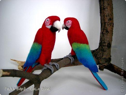 Маленькие зеленокрылые ары (всего 19 см) были сделаны в подарок любителю птиц.  фото 2