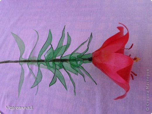 Здравствуйте жители и гости Страны Мастеров! Эта лилия появилась у меня ко дню рождения одной девушки. Вот она- лилия для Лилии! Может быть и кому-нибудь из вас пригодится. фото 14