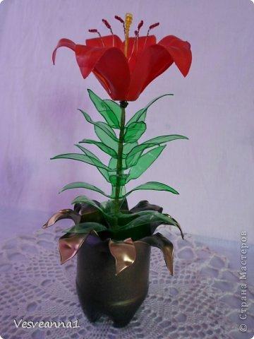 Здравствуйте жители и гости Страны Мастеров! Эта лилия появилась у меня ко дню рождения одной девушки. Вот она- лилия для Лилии! Может быть и кому-нибудь из вас пригодится. фото 1