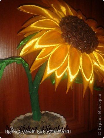 Я покажу вам как сделать вот такой солнечный цветок:)):))Нам понадобится: лента атласная жёлтая-3 м, лента зелёная около метра, зёрна кофе, гуашь зелёная, гуашь коричневая, проволока, салфетки(туалетная бумага), клей(у меня Мастер клей), клей ПВА, картон, гипс, чай, нитки. фото 45
