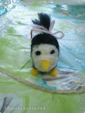 Сидела я в интернете и увидела обычное фото пингвина.