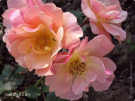 """Корзиночка роз с конфетами """"Осенний вальс"""". фото 10"""