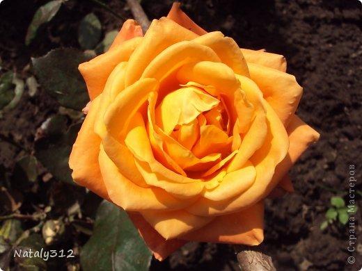 """Корзиночка роз с конфетами """"Осенний вальс"""". фото 7"""