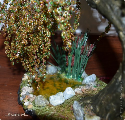денежное дерево фото 7