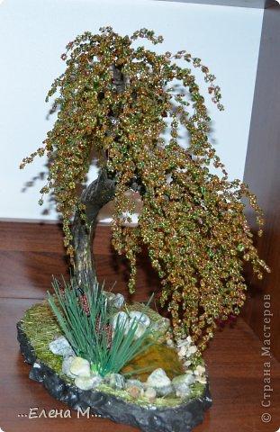 денежное дерево фото 8