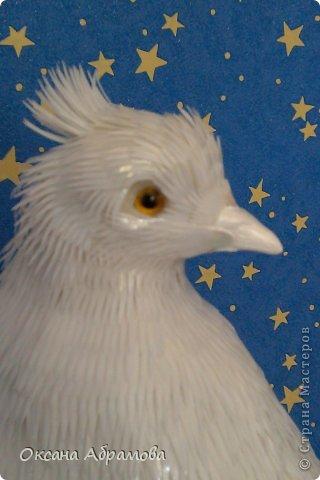 Приветствую Вас, мой дорогой гость! Приятно познакомиться - я, Королевский голубь! Символ мира, любви и доверия! Со мной, люди, связывают все самое лучшее: надежды на мир и согласие, приятные известия и, конечно же, любовь. Ведь неслучайно влюбленные всех стран без слов понимают, что означают два сидящих рядом голубка. Белый цвет всегда означал чистоту, невинность помыслов и желаний, радость жизни, искренность слов, непорочность души. фото 58