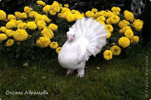Приветствую Вас, мой дорогой гость! Приятно познакомиться - я, Королевский голубь! Символ мира, любви и доверия! Со мной, люди, связывают все самое лучшее: надежды на мир и согласие, приятные известия и, конечно же, любовь. Ведь неслучайно влюбленные всех стран без слов понимают, что означают два сидящих рядом голубка. Белый цвет всегда означал чистоту, невинность помыслов и желаний, радость жизни, искренность слов, непорочность души. фото 61