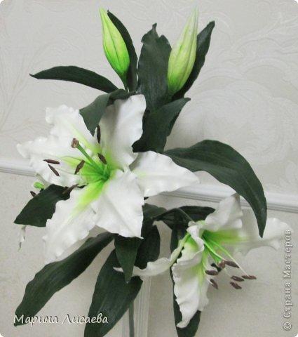 Здравствуйте, уважаемые жители СМ! Хочу получше показать вам свою ветку белой лилии. Я ее уже размещала, но один снимок в куче с другими. Теперь показываю ее поподробней, так как очень она мне нравится. А вам? фото 6