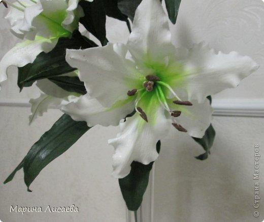 Здравствуйте, уважаемые жители СМ! Хочу получше показать вам свою ветку белой лилии. Я ее уже размещала, но один снимок в куче с другими. Теперь показываю ее поподробней, так как очень она мне нравится. А вам? фото 5