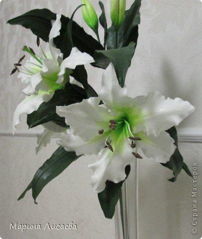 Здравствуйте, уважаемые жители СМ! Хочу получше показать вам свою ветку белой лилии. Я ее уже размещала, но один снимок в куче с другими. Теперь показываю ее поподробней, так как очень она мне нравится. А вам? фото 4