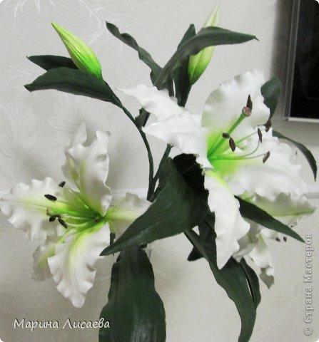 Здравствуйте, уважаемые жители СМ! Хочу получше показать вам свою ветку белой лилии. Я ее уже размещала, но один снимок в куче с другими. Теперь показываю ее поподробней, так как очень она мне нравится. А вам? фото 3