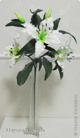 Здравствуйте, уважаемые жители СМ! Хочу получше показать вам свою ветку белой лилии. Я ее уже размещала, но один снимок в куче с другими. Теперь показываю ее поподробней, так как очень она мне нравится. А вам? фото 2