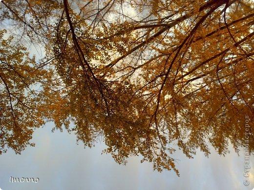 Фатназии...  Осенний ветер до утра затих И притаился под листом кленовым, Набраться сил, чтобы сорваться снова, Невольно превратившись в легкий стих. Потом, смешаться с каплями дождя, Швыряя их налево и направо, Отдать зонтам раскрытым, на расправу Небесных этих маленьких бродяг. Чтоб с высоты разбиться об асфальт И облака гонять в бездонных лужах, Осесть на крыше и тихонько слушать, Как заиграет водосточный альт...   10.2013г.   фото 2