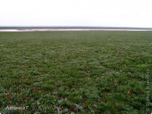 В своём листочке я попыталась  отобразить природу  края, в котором   живу: степь,тюльпаны весной  и  соленое   озеро Маныч Гудило.. Обновила немного. фото 6