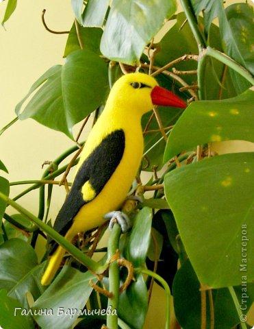 Ярко-желтая иволга выполнена для украшения зимнего сада. Птица изготовлена в натуральную величину. фото 3