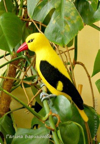 Ярко-желтая иволга выполнена для украшения зимнего сада. Птица изготовлена в натуральную величину. фото 2