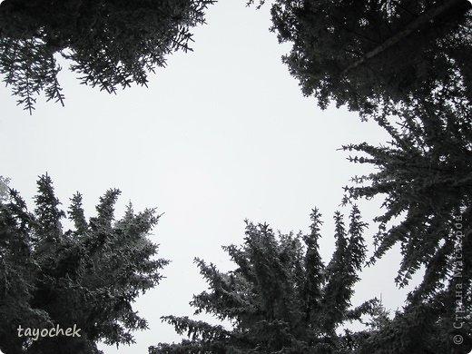 Здравствуйте, гости моей странички! Приглашаю Вас отдохнуть, расслабиться, полюбоваться осенними Карпатами, побывать в некоторых музеях. ТАК как район горный, высота над уровнем моря разная, погода соответственно тоже, мы за неделю смогли увидеть и осенние Карпаты, и зимние! Сначала  просто очарование гор фото 22