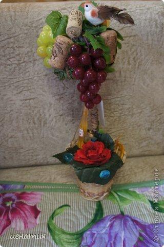 решила покзать свои деревца,их уже нет ,остались фотки:))))))))))))как и водится виноградное фото 1