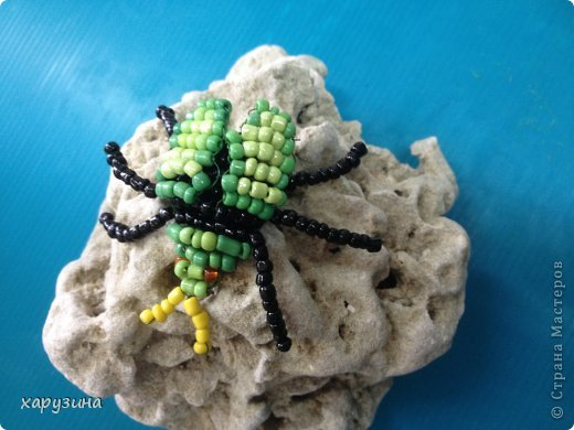 Жучок,зеленый бочок фото 3