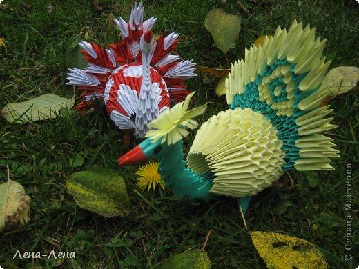Вышли птички погулять, жёлтых листьев поклевать.))) А кроме листьев нашли даже запоздалый одуванчик. фото 2