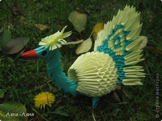 Вышли птички погулять, жёлтых листьев поклевать.))) А кроме листьев нашли даже запоздалый одуванчик. фото 5