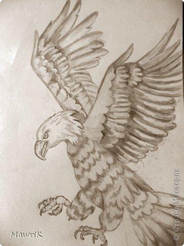 орёл фото 1