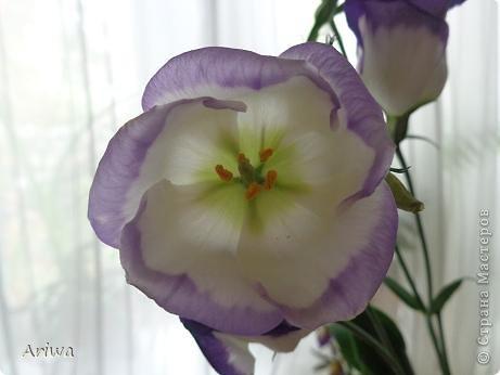 Давно мечтала слепить лизиантус. Лето ушло, последние цветочки в саду замерзли, переходим на цветочные магазины... Купила живой цветок, и за дело... фото 2