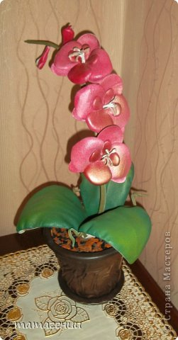 розовые розы фото 2