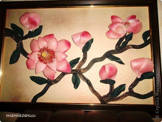 розовые розы фото 9
