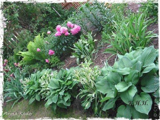 """Любите ли вы цветы, как люблю их я? Сразу понятно, что эта запись в блоге будет о цветах. У большинства людей уже мысли про новый год, а я хочу поделится с вами яркими красками весны и лета, которые для меня промчались  в этом году незаметно.....  :(   Весна у нас (Беларусь) в этом году наступила очень поздно, а лето промчалось со скоростью света и мне как-то очень не хватает есчё тёплых деньков и красок моих цветов, которые я выращиваю на даче (у нас домик в деревне). Возможно  кто-то хотел бы продлить лето как и я, вот эта запись для вас.  Фото у меня много, поэтому фоторепортаж будет состоять как минимум из 2-х частей.  Почти все они буду с этого лета. Возможно пару с прошлого года.   Итак, если вам интересно, поехали. Начну с моего любимца.  Его величество """"Рябчик императорский"""" Многолетник.    фото 17"""