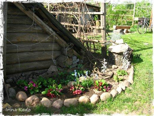 """Любите ли вы цветы, как люблю их я? Сразу понятно, что эта запись в блоге будет о цветах. У большинства людей уже мысли про новый год, а я хочу поделится с вами яркими красками весны и лета, которые для меня промчались  в этом году незаметно.....  :(   Весна у нас (Беларусь) в этом году наступила очень поздно, а лето промчалось со скоростью света и мне как-то очень не хватает есчё тёплых деньков и красок моих цветов, которые я выращиваю на даче (у нас домик в деревне). Возможно  кто-то хотел бы продлить лето как и я, вот эта запись для вас.  Фото у меня много, поэтому фоторепортаж будет состоять как минимум из 2-х частей.  Почти все они буду с этого лета. Возможно пару с прошлого года.   Итак, если вам интересно, поехали. Начну с моего любимца.  Его величество """"Рябчик императорский"""" Многолетник.    фото 9"""