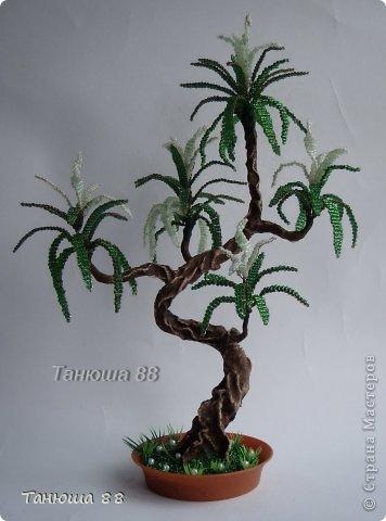бонсай- Пальмочка фото 1