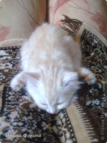 Здравствуйте! Меня зовут Мурзик, правда по старой памяти меня хозяйка называет  Барсиком, так звали прошлого кота. А полгода я вообще Мусей был, потому что моя хозяйка думала, что я кошка. Но через полгода, когда я подрос и стал мужчиной, стало неожиданно понятно совсем обратное.  фото 18
