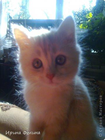 Здравствуйте! Меня зовут Мурзик, правда по старой памяти меня хозяйка называет  Барсиком, так звали прошлого кота. А полгода я вообще Мусей был, потому что моя хозяйка думала, что я кошка. Но через полгода, когда я подрос и стал мужчиной, стало неожиданно понятно совсем обратное.  фото 17