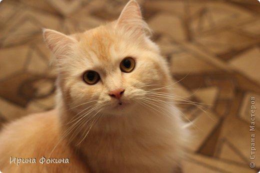 Здравствуйте! Меня зовут Мурзик, правда по старой памяти меня хозяйка называет  Барсиком, так звали прошлого кота. А полгода я вообще Мусей был, потому что моя хозяйка думала, что я кошка. Но через полгода, когда я подрос и стал мужчиной, стало неожиданно понятно совсем обратное.  фото 1