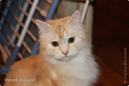 Здравствуйте! Меня зовут Мурзик, правда по старой памяти меня хозяйка называет  Барсиком, так звали прошлого кота. А полгода я вообще Мусей был, потому что моя хозяйка думала, что я кошка. Но через полгода, когда я подрос и стал мужчиной, стало неожиданно понятно совсем обратное.  фото 19