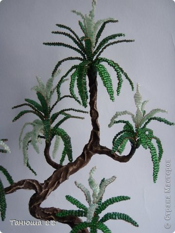 бонсай- Пальмочка фото 4